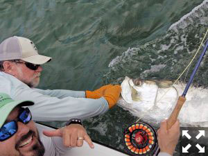 July is a great month to fly fish for tarpon in the gulf.