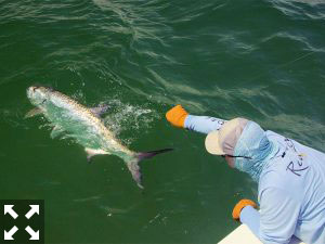 This is my favorite time to fly fish for tarpon.
