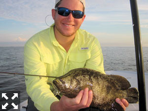 Raul Ortiz had good action catching and releasing tripletail on DOA Shrimp while fishing Sarasota Bay with Capt. Rick Grassett in a previous August.