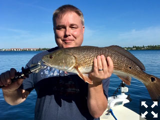 That is one good looking Redfish caught in Sarasota Bay while fishing with Capt. Kelly Kurtz.