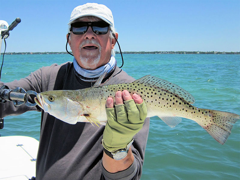 Bill Morrison, from Anna Maria Island, with a nice trout caught and released on a Clouser fly while fishing Sarasota Bay with Capt. Rick Grassett in a previous May.