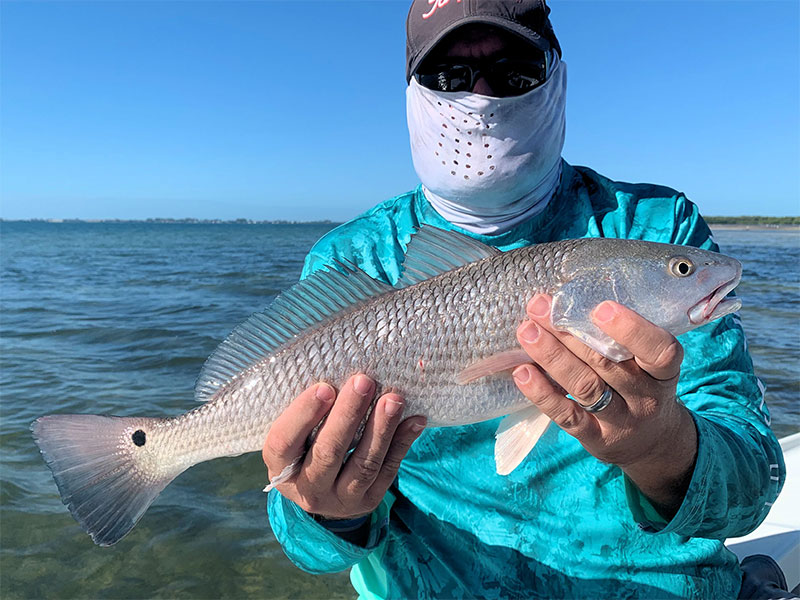 Cliff Ondercin with a redfish caught and released on a CAL jig with a grub while fishing Sarasota Bay with Capt. Rick Grassett recently.
