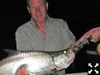 James Lascelles, from the UK, caught and released snook and tarpon on flies while fishing dock lights before dawn with Capt. Rick Grassett on a couple of different trips in a previous September.